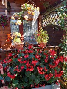 Zdjęcie ganku przed drewnianym domem, który jest udekorowany kwiatami.