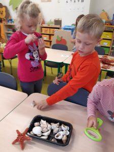 Para uczniów z oddziału przedszkolnego ogląda pod lupami muszelki , które wyjęli z plastikowego pudełka leżącego przed nimi na stoliku.