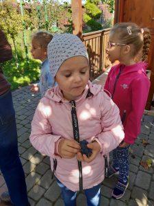 Dziewczynka z oddziału przedszkolnego stoi z zamkniętymi oczami trzymając w dłoniach winogrono.