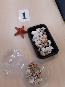 Na stoliku leżą w dwóch plastikowych pudełkach muszelki, obok nich rozgwiazda oraz karteczka z numerem 1,