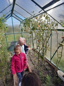Uczniowie odziału przedszkolnego w szklarni, oglądają sadzonki pomidora.