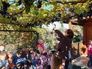 Wśród dzieci z oddziału przedszkolnego zgromadzonych przed drewnianym domkiem, stoi Pani zrywająca winogrona z rozportartej nad uczniami winorośli.
