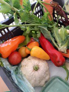 W plastikowej skrzynce ułożone są warzywa - kolorowe papryki, pomidory, kalafior, patison oraz marchew.