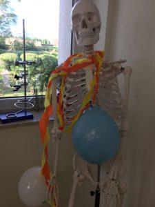Model kościotrupa przybrany białym i niebieskim balonem z kolorowym łańcuchem zawieszonym wokół szyi.